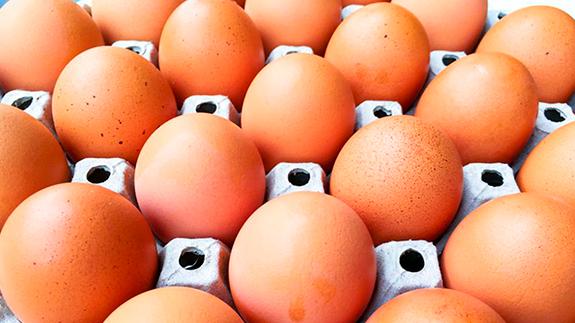 Analizador para el control de calidad de Huevos y Ovoproductos CDR FoodLab-Tecnilab